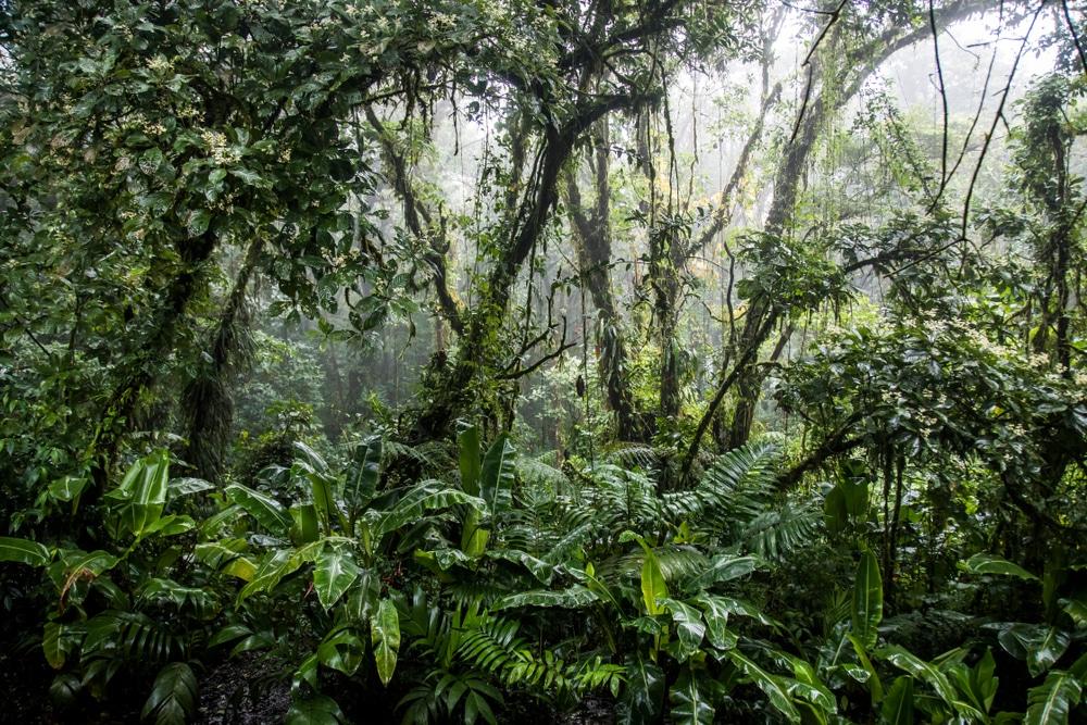 世界の金融機関26社、「金融による生物多様性誓約」に署名。投融資を通じて生物多様性に貢献する5つの目標を設定