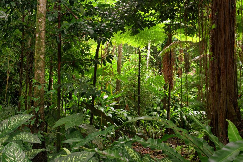 英キングフィッシャー、レインフォレスト・アライアンスの新イニシアチブ「Forest Allies」の創設メンバーに。森林再生プロジェクトを支援