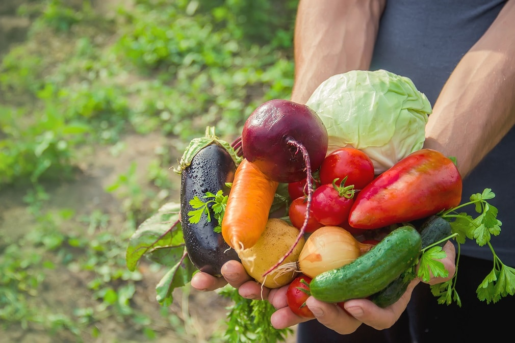 hakken、フードロス削減を目指す乾燥廃棄野菜事業で熊本県阿蘇郡高森町を含む4組織と提携