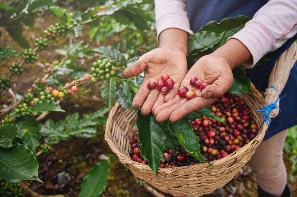 ティピカ、オンラインプラットフォームを始動。コーヒー生豆流通のDXを推進