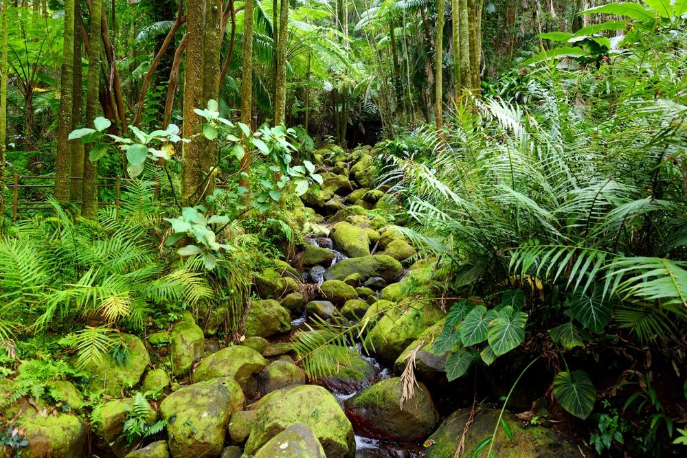 英Global Canopy、生物多様性保全のための資金調達方法のガイドを発表