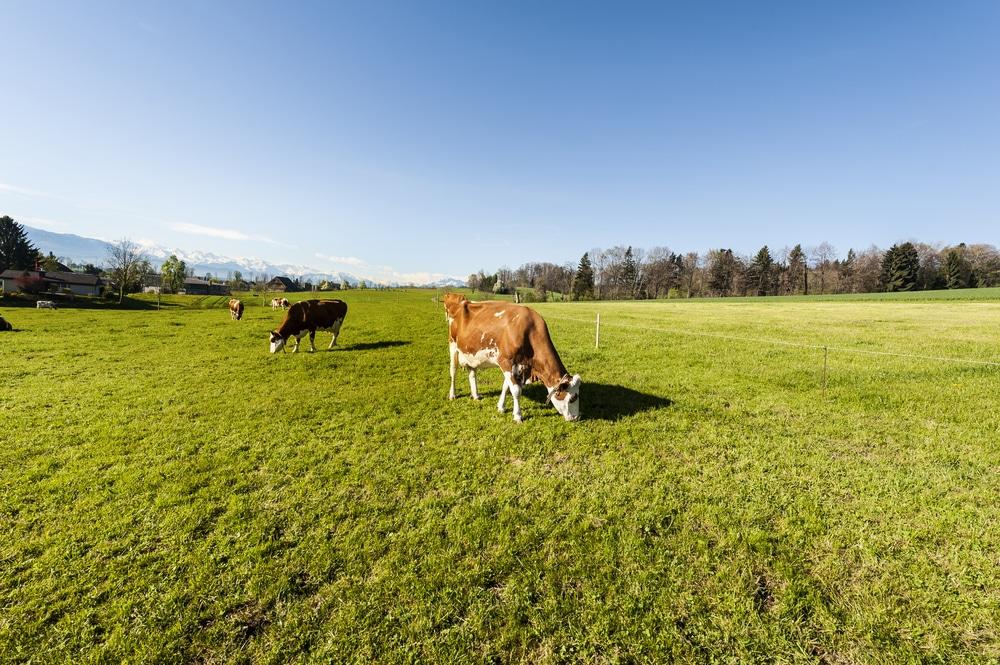 【Circle Economyの視点#3】サーキュラーエコノミーに私たちが肉を食べる未来はあるのだろうか