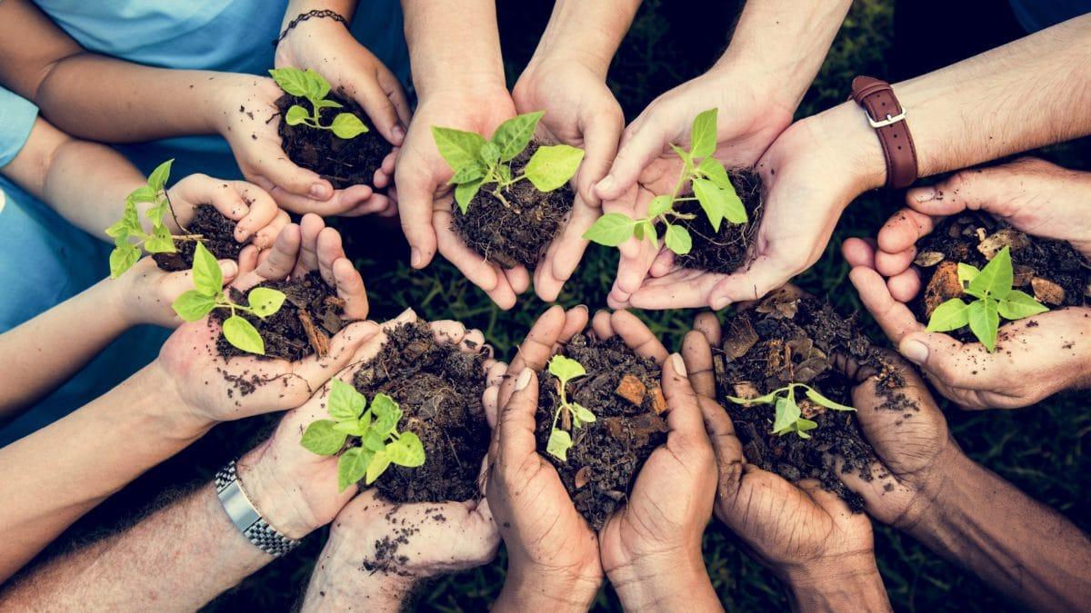 検索エンジンのエコシア、企業や組織が木を植えられるプログラムEcosia Treesをローンチ