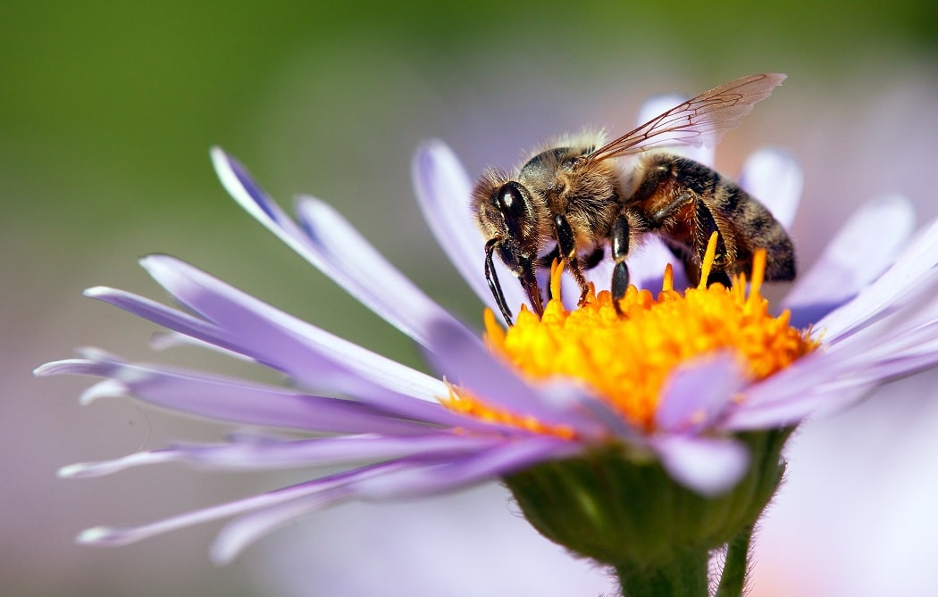 欧州委の新レポート、生物多様性保全に向けた花粉媒介者保護の緊急性を強調