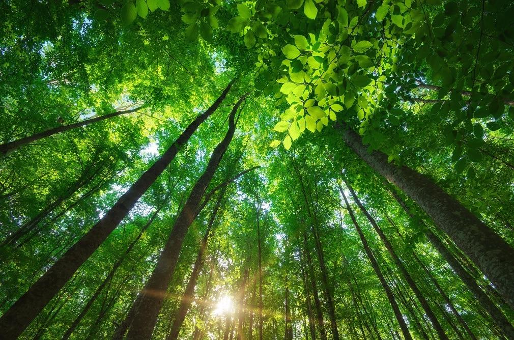 SASB、気候リスク技術報告書を発表。気候関連財務情報開示に対するアプローチを概説