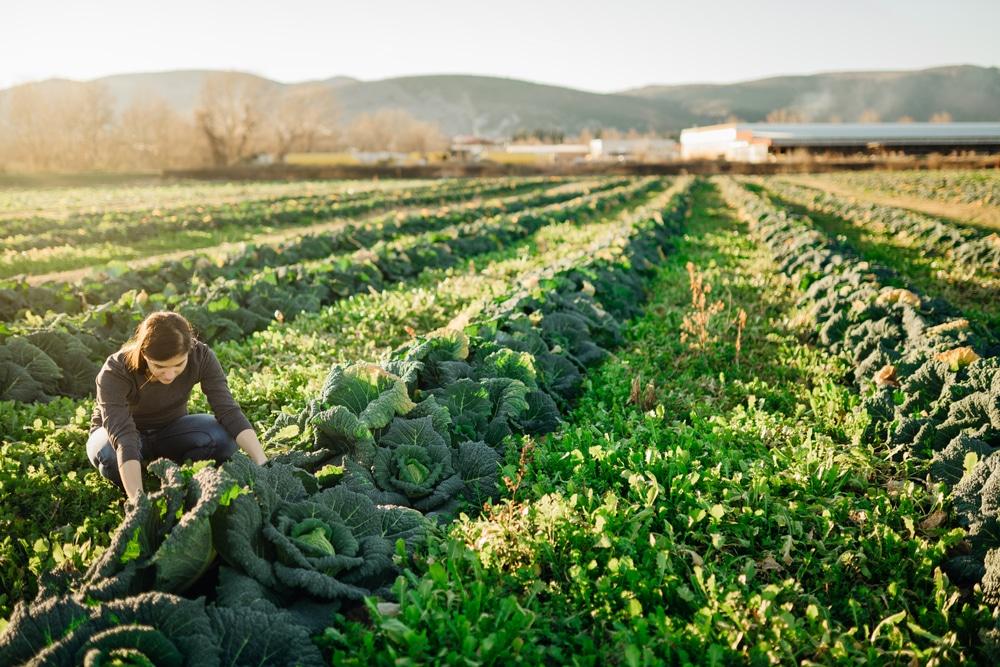 世界の食品廃棄物、従来推計より10億トン以上多く。WWFとテスコの最新調査より