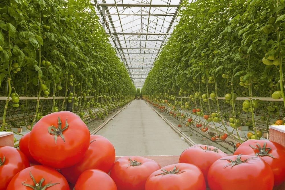 JFEエンジニアリング、農業ビッグデータ活用サービス「AIアグリフォース」を提供開始