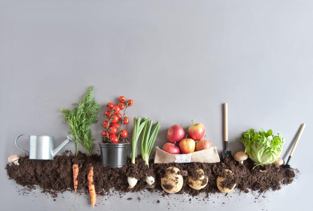 エレン・マッカーサー財団、新レポートを発表。食品の大規模な再設計で自然再生を目指す