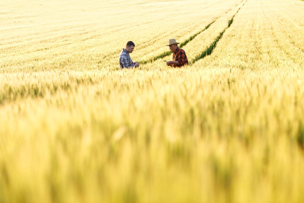 国連レポート、SDGs達成を妨げる非効率な農業支援の見直しを。6つのステップも提唱