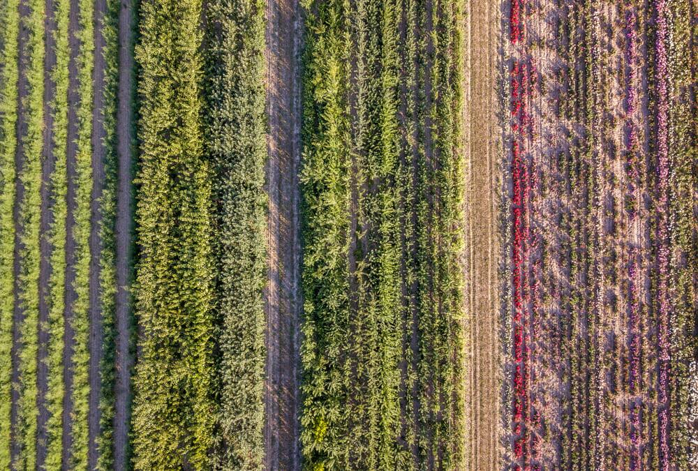 食品のリ・デザインで自然環境を再生する4つの戦略とは?
