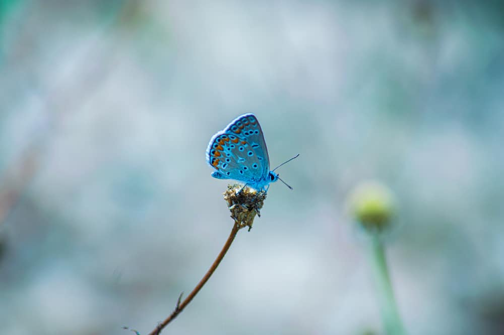 WWFジャパン、創立50周年を機に気候変動と生物多様性に関する2つの目標を発表